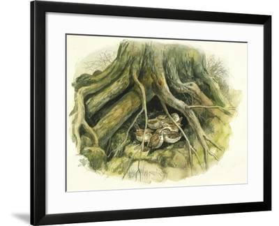 Birds: Passeriformes, Winter Wrens (Troglodytes Troglodytes) Hollow of Tree Trunk--Framed Giclee Print