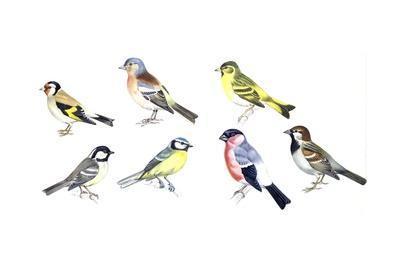 https://imgc.artprintimages.com/img/print/birds-passeriformes_u-l-puwpwz0.jpg?p=0
