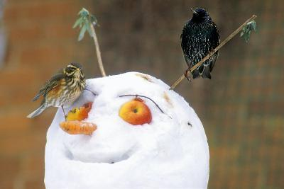 Birds Perched on a Snowman-Dr. Keith Wheeler-Photographic Print