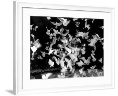 Birds Performing in a Circus-Loomis Dean-Framed Photographic Print