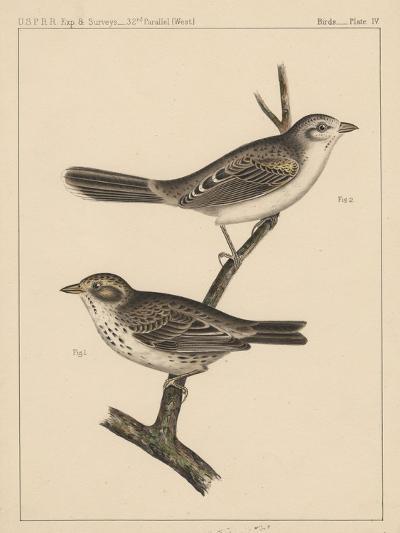 Birds, Plate IV, 1855--Giclee Print