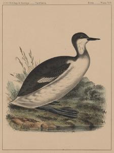 Birds, Plate VIII, 1855