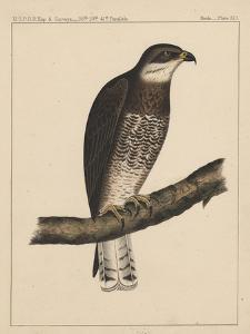 Birds, Plate XIII, 1855
