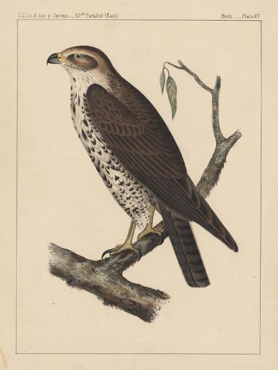 Birds, Plate XV, 1855--Giclee Print