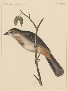 Birds, Plate XXIX, 1855