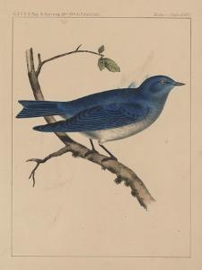 Birds, Plate XXXV, 1855