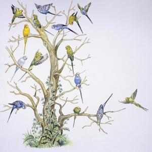 Birds: Psittaciformes, Budgerigar (Melopsittacus Undulatus) on Tree