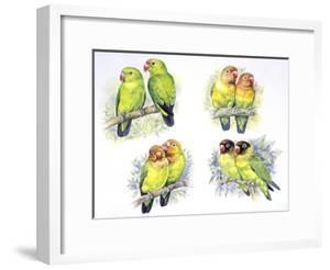 Birds: Psittaciformes