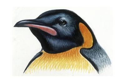 Birds: Sphenisciformes, Head of King Penguin (Aptenodytes Patagonicus)--Giclee Print