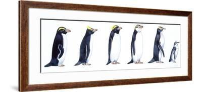 Birds: Sphenisciformes--Framed Giclee Print