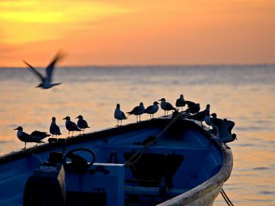 Birds Standing on the Bow of a Wooden Boat at Sunset-Michael Melford-Photographic Print