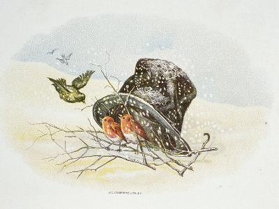 Birds under Top Hat, 19th century--Giclee Print