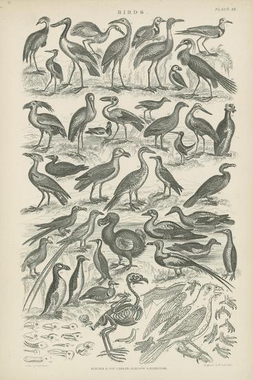 Birds--Giclee Print