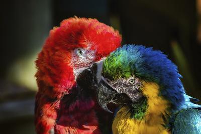 Birds-Pixie Pics-Photographic Print