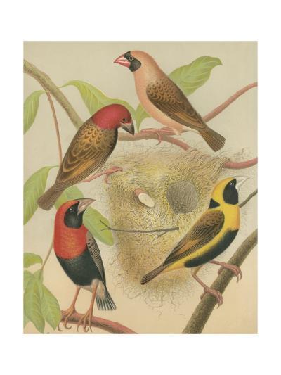 Birdwatcher's Delight II-Cassell-Art Print