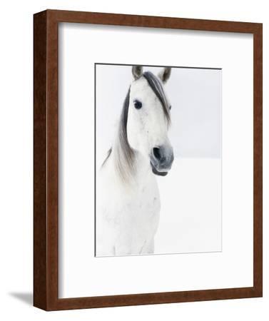 White Horse in Snow
