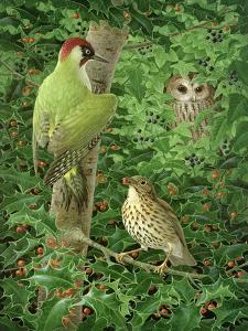 Woodpecker, Owl and Thrush by Birgitte Hendil
