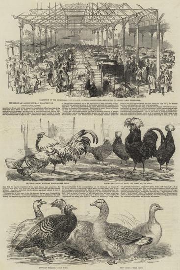 Birmingham Agricultural Association--Giclee Print