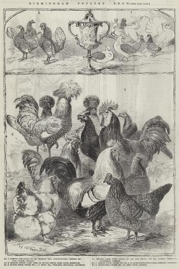 Birmingham Poultry Show-Harrison William Weir-Giclee Print