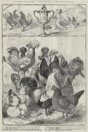 https://imgc.artprintimages.com/img/print/birmingham-poultry-show_u-l-pumb920.jpg?p=0