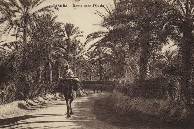 Biskra - Road in the Oasis--Photographic Print