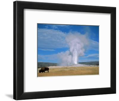 Bison And Old Faithful Yellowstone National Park Wy Photographic Print By Brian Maslyar Art Com