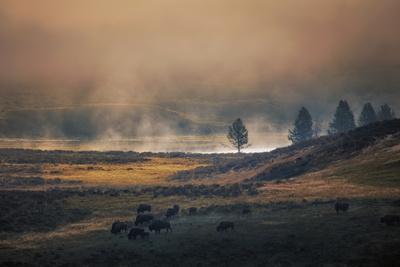 https://imgc.artprintimages.com/img/print/bison-mist-landscape-yellowstone-national-park-wyoming_u-l-q10dk940.jpg?p=0