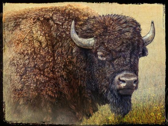 Bison Portrait I-Chris Vest-Art Print