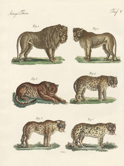 Biting Animals--Giclee Print