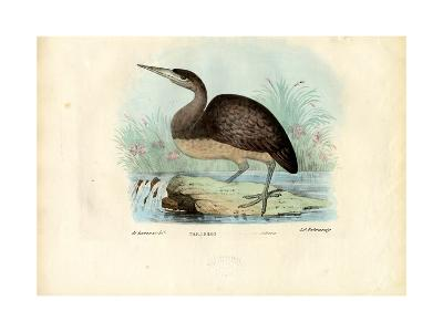 Bittern, 1863-79-Raimundo Petraroja-Giclee Print