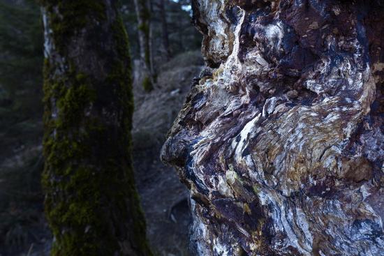 bizarre dead wood-Klaus Scholz-Photographic Print