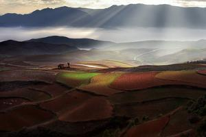 Early Spring On Red Land by BJ Yang
