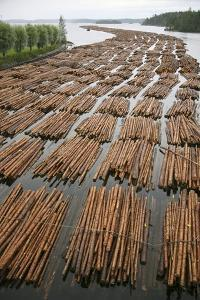 Timber Floating on a River by Bjorn Svensson