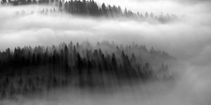 The Mist B+W by Bjorn Wennerwald