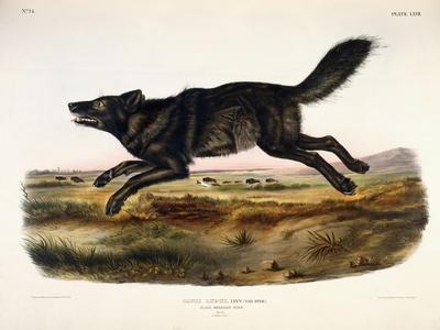 https://imgc.artprintimages.com/img/print/black-american-wolf-male-1845_u-l-ppqttx0.jpg?p=0