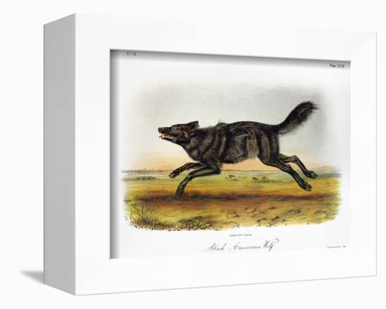Black American Wolf-John James Audubon-Framed Premier Image Canvas