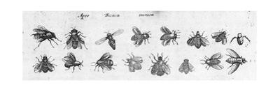 Black and White Bee Illustrations