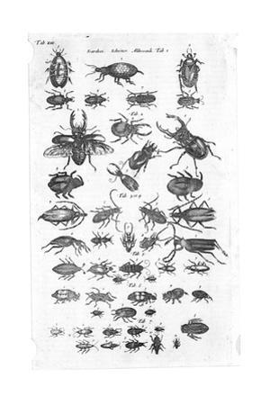 Black and White Beetle Illustrations