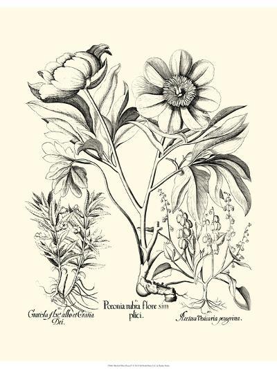 Black and White Besler Peony IV-Besler Basilius-Art Print