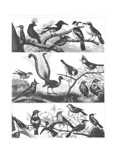 Black and White Bird Illustrations--Art Print