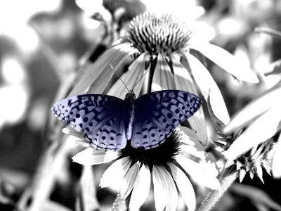 Black And White Butterfly-Jenn Gaylord-Photographic Print