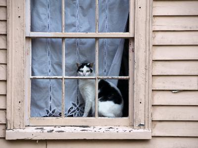 Black and White Cat Looking Out the Window of an Historic Home-Todd Gipstein-Photographic Print