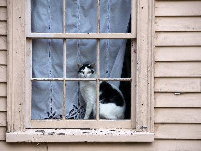 https://imgc.artprintimages.com/img/print/black-and-white-cat-looking-out-the-window-of-an-historic-home_u-l-p8c8hb0.jpg?p=0