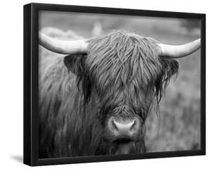 Black and White Cow 16 x 20 Framed Canvas