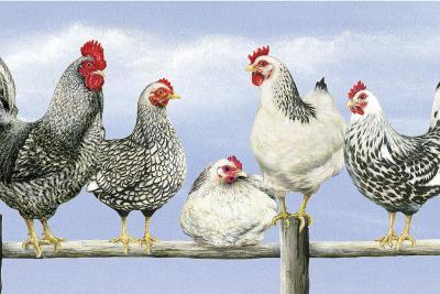 Black and White Hens 1-Janet Pidoux-Giclee Print