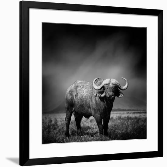 Black and White Image of A Buffalo-byrdyak-Framed Photographic Print