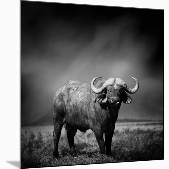 Black and White Image of A Buffalo-byrdyak-Mounted Premium Photographic Print