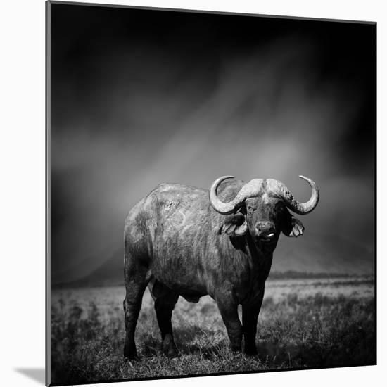 Black and White Image of A Buffalo-byrdyak-Mounted Photographic Print