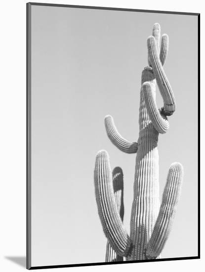 Black and White Image of a Cactus-Rob Lang-Mounted Photographic Print