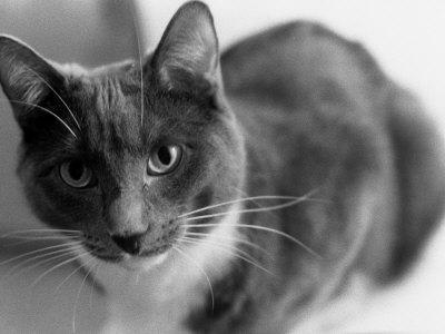 https://imgc.artprintimages.com/img/print/black-and-white-image-of-a-cat_u-l-p3h5cz0.jpg?p=0